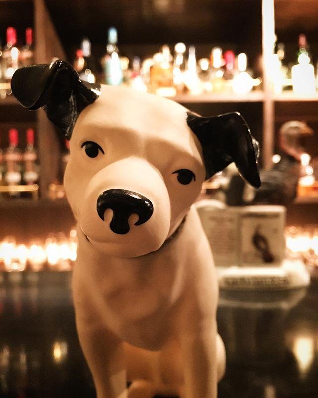 【happy new year 2018! year of the dog】明けましておめでとうございます。本年もよろしくお願い申し上げます。良いお正月をお過ごしください。1/4より営業となります。皆様のお越しを心よりお待ちしております。BAR TooL#bartool #bar #authenticbar #yearofthedog #バーツール #行徳 #行徳BAR #浦安 #船橋 #戌年