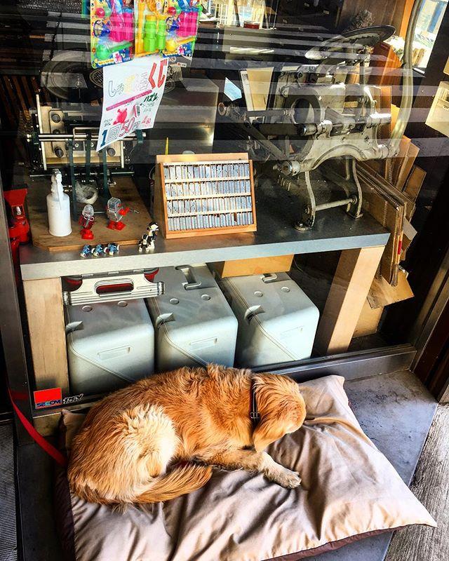 本日は名刺とショップカードのリニューアルデザイン打ち合わせで荻窪。ステキな仕上がりになりそう!オマケの収穫もあり。やっぱ顔合わせて話し合うの大事だなー。さ、仕入れして準備。充実しとる。#bartool #bar #authenticbar #dog #活版印刷 #バーツール #行徳 #行徳BAR #浦安 #船橋 #犬 #イヌ