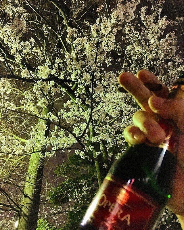 少し早めに切り上げて#夜桜見物 。#bartool #bar #authenticbar #cigarillo #cigar #calmdown #夜桜 #花見 #バーツール #行徳 #シガー #葉巻 #シガリロ #行徳BAR #浦安 #船橋